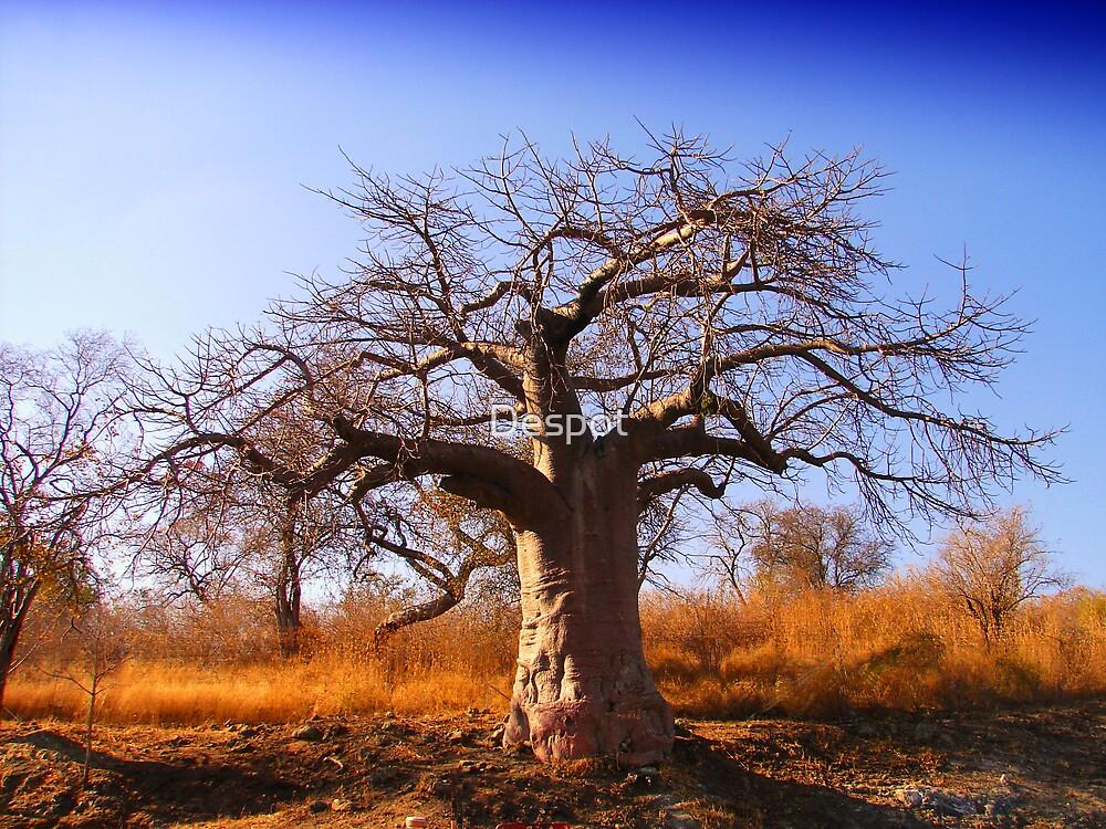 Baobab 1 by Despot