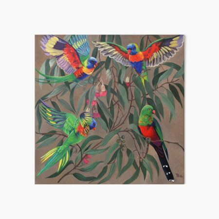 Birds from Paradise. Rosellas Art Board Print