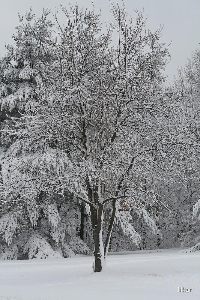 Fresh Fallin Snow.. by lilkarl