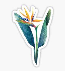 Watercolor strelitzia bouquet Sticker