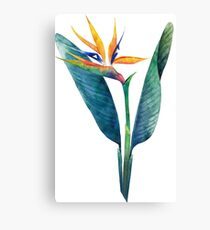 Watercolor strelitzia bouquet Canvas Print