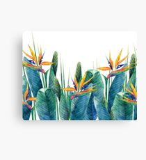 Watercolor strelitzia Canvas Print