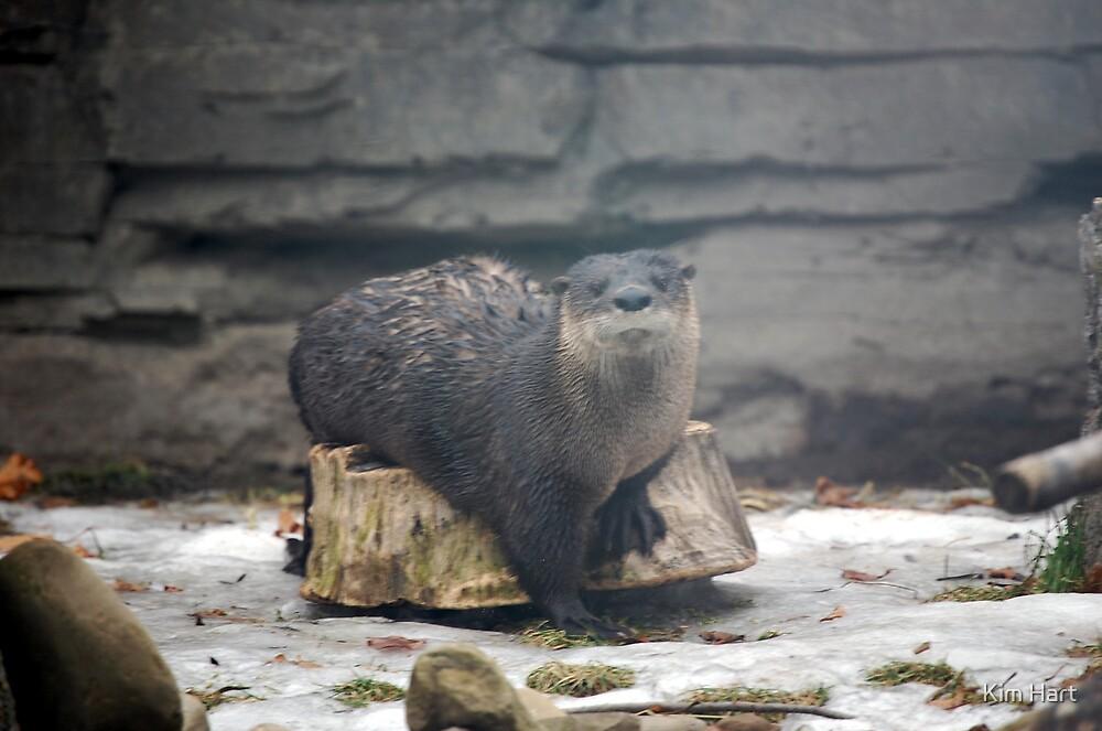 Happy Otter by Kim Hart