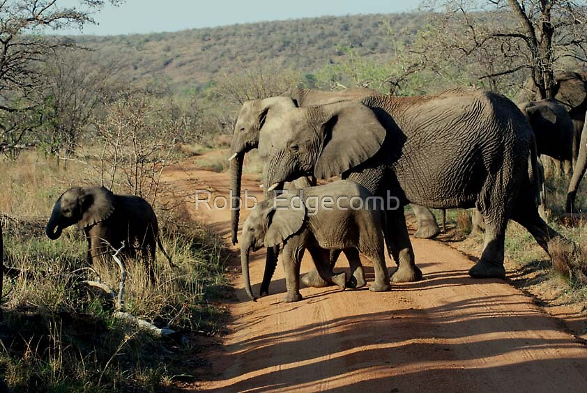 Trafic in Africa by Robb  Edgecomb