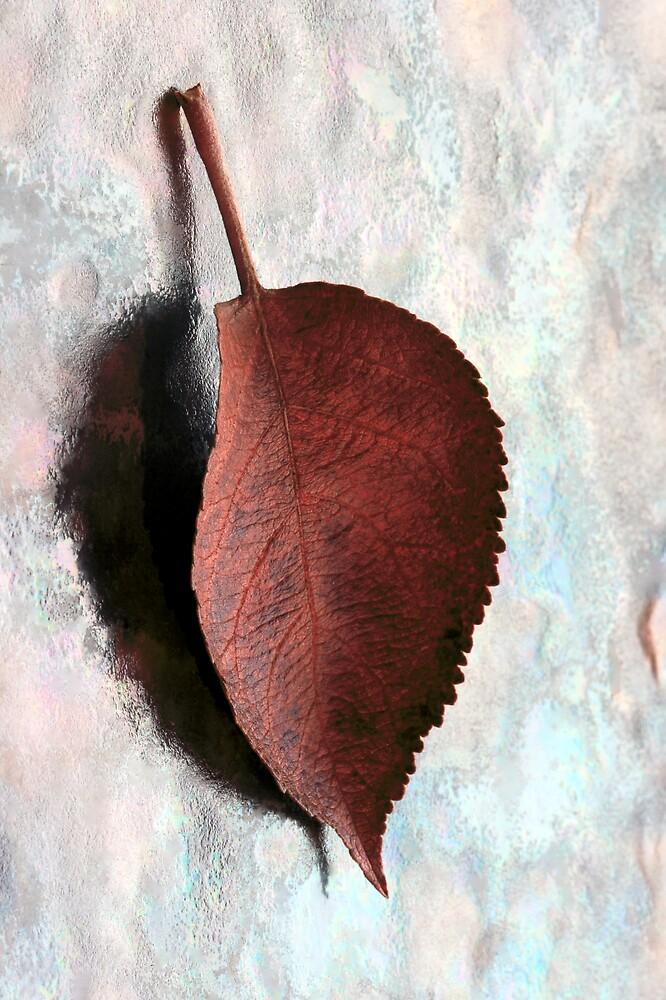 Leaf by kitlew