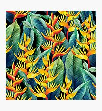 Watercolor heliconia Photographic Print