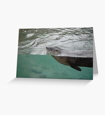 Swimming Otter Greeting Card