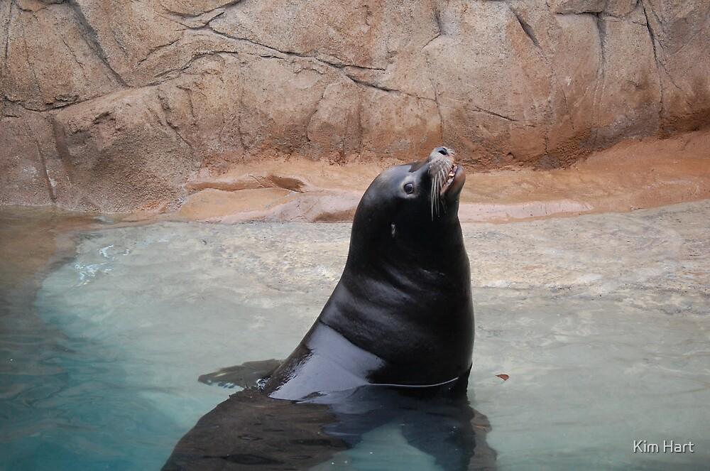 Seal by Kim Hart