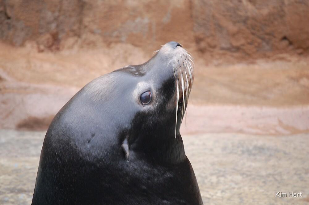 Seal Close Up by Kim Hart