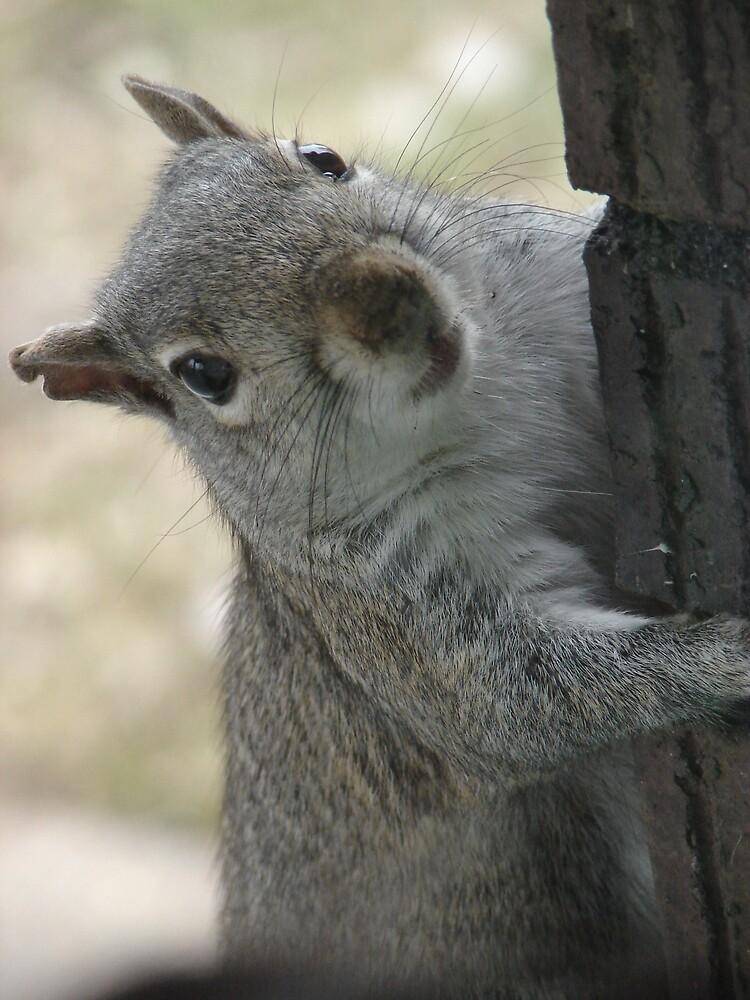 Mama Squirrel by inventor