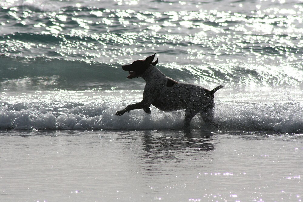 Pointer Playing in the sea by Rob Mc Alister