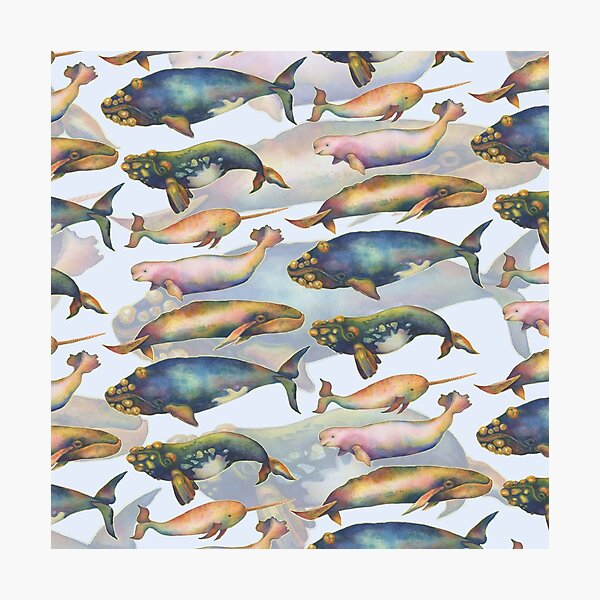 5 Whales Doubled   Photographic Print