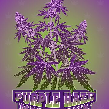 Purple Haze Medicinal Marijuana Cannabis by grebenru
