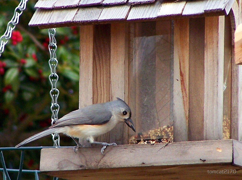 titmouse having a snack by tomcat2170