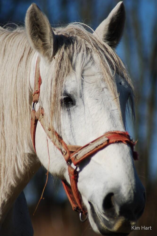 Horse by Kim Hart