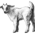 Goat Baby G147  by schukinart