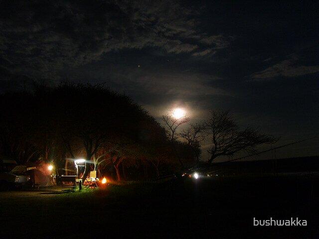 Bushveld christmas nights  by bushwakka