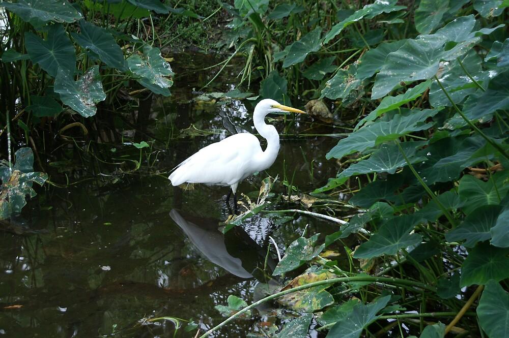 White Egret by kld73
