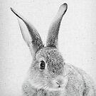 Rabbit 33 von froileinjuno