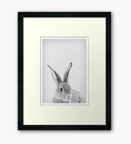 Rabbit 33 Framed Art Print
