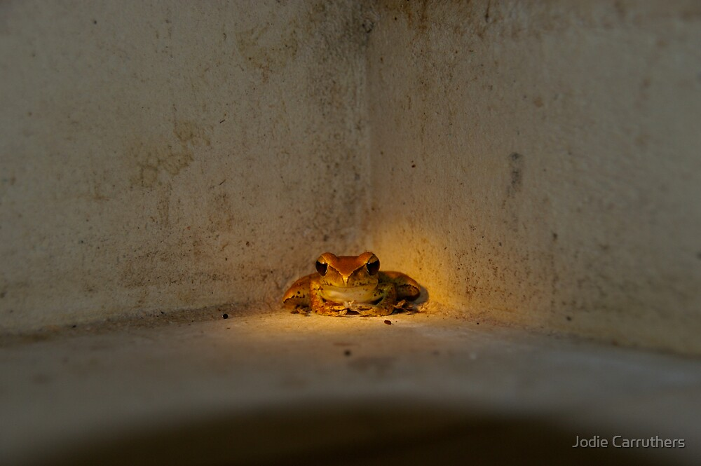 in the spotlight by Jodie Carruthers