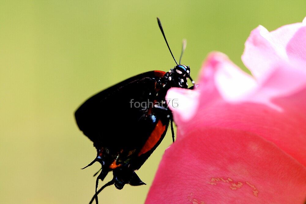 beautiful butterfly by foghat76