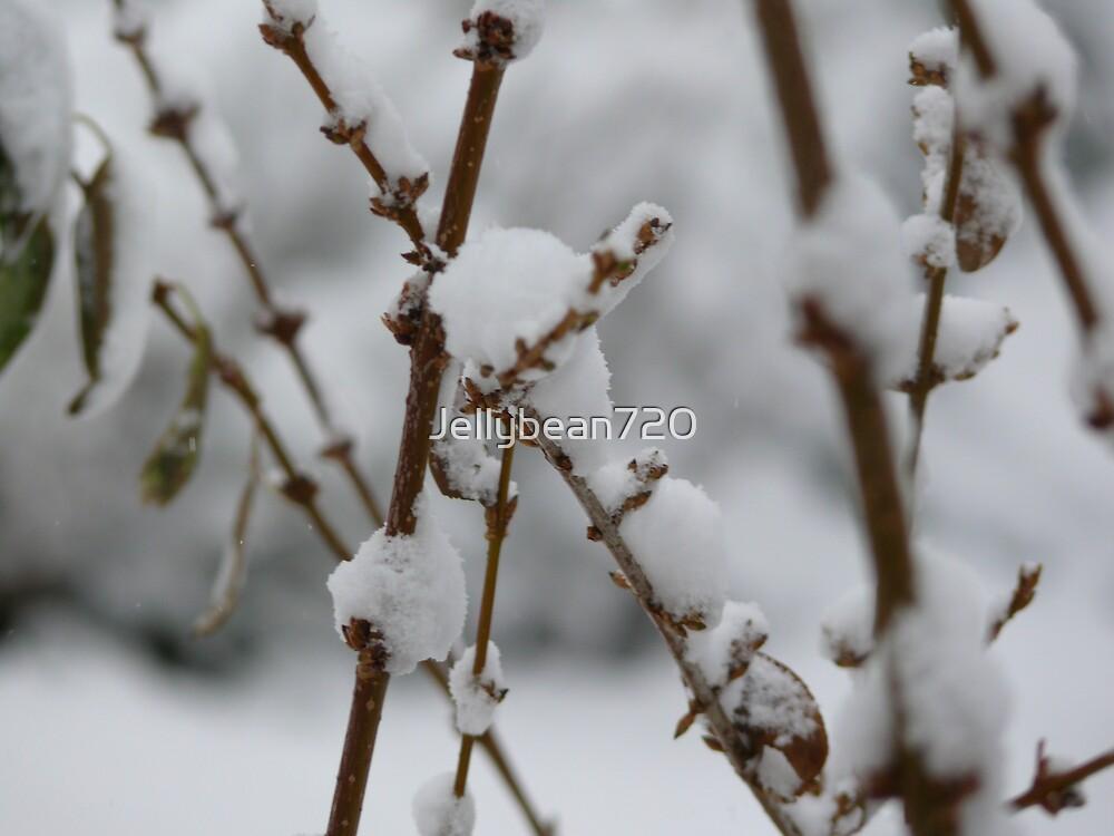 Winter storm by Jellybean720