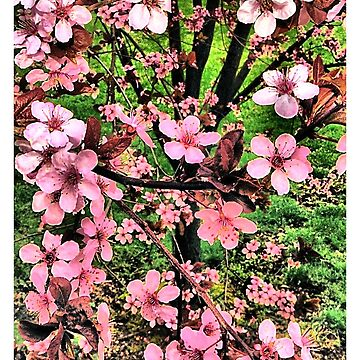 Pink Tree Flowers by kyler1999