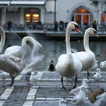 Swan Lake by Hojacita