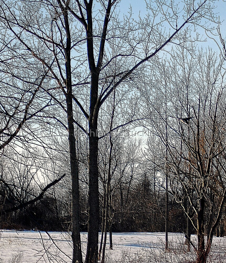 Winter In The Park by Kathleen Struckle