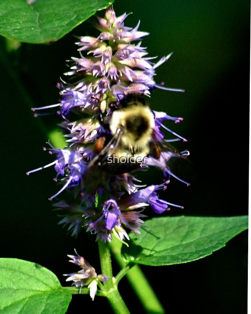 Sweet Nectar 2 by sholder