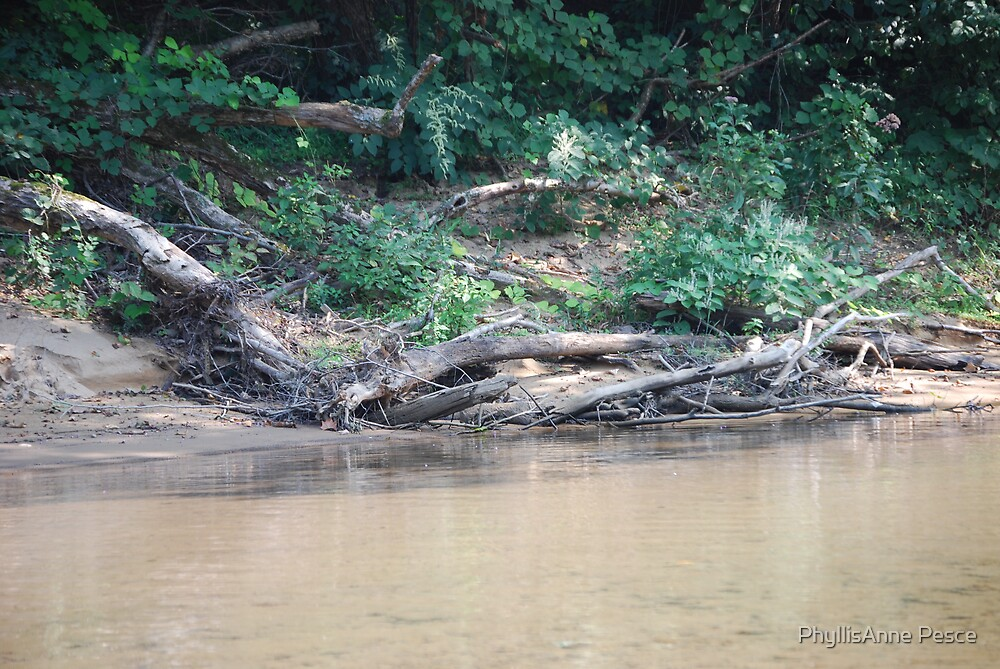 """My own """"Walden Pond"""" by PhyllisAnne Pesce"""