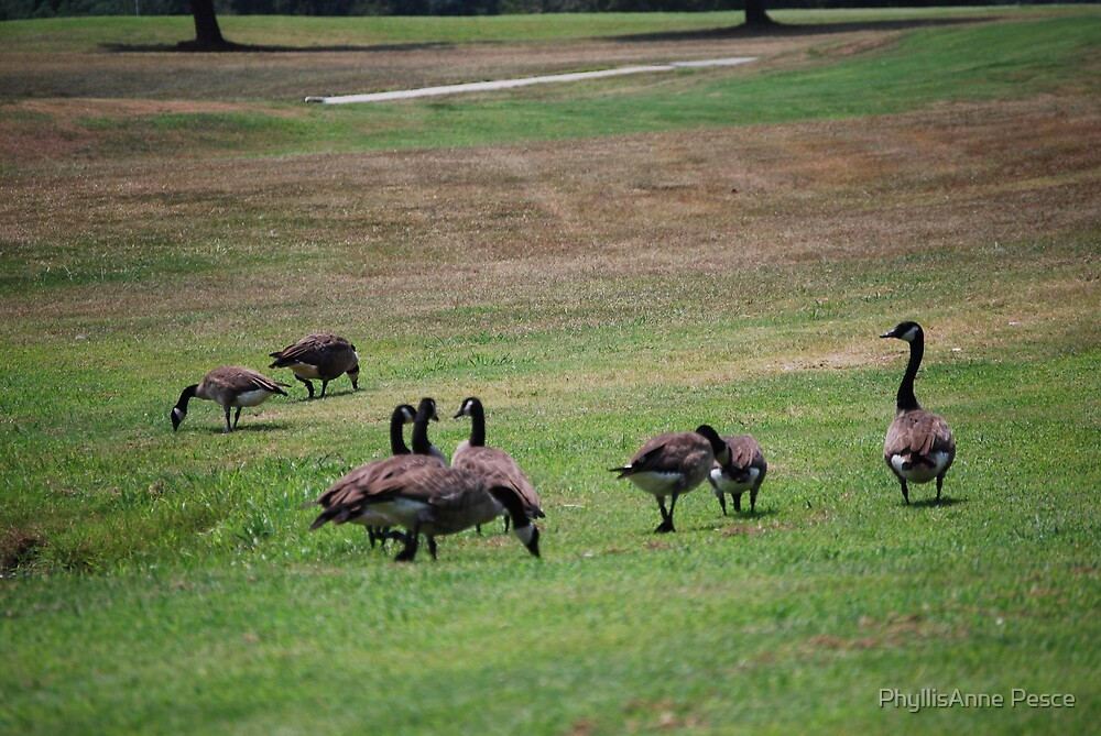 Golfing Geese by PhyllisAnne Pesce