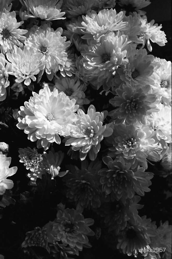 Flower 3 by maka1967