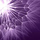 Dandelion. From The Back In Purple by Diane Arndt