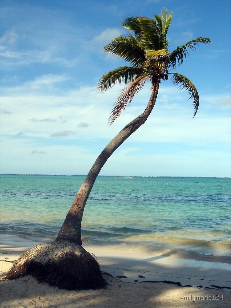 Lonely Palm by emilymarie124