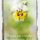 Pray you, Love by Marilyn Cornwell