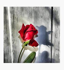 Red Rose Bud Shadow Photographic Print