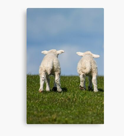 Two Little Lambs Canvas Print