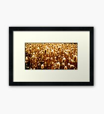 The Golden Sickle Framed Print