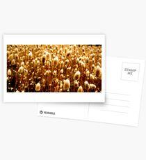 The Golden Sickle Postcards