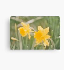 35mm film flowers Canvas Print