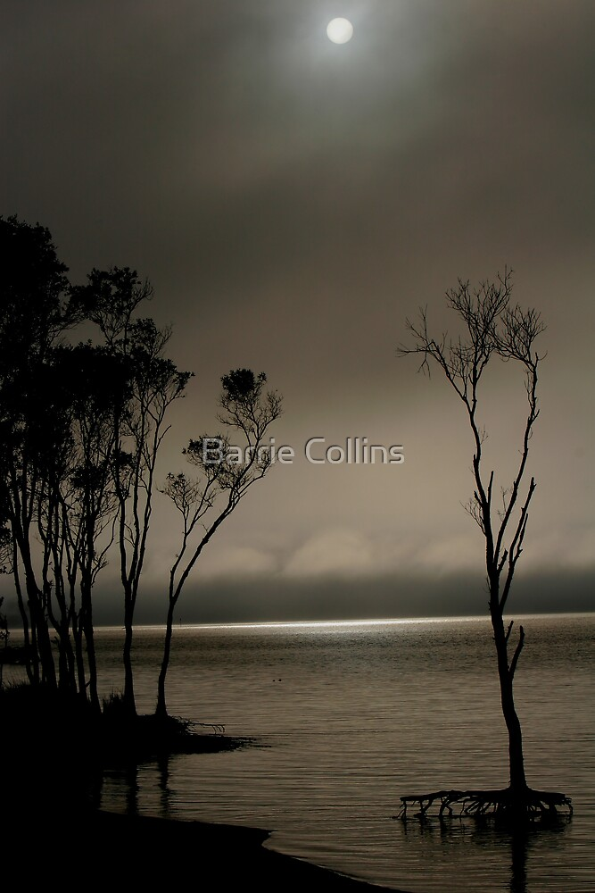 ' Morning Fog ' by Barrie Collins