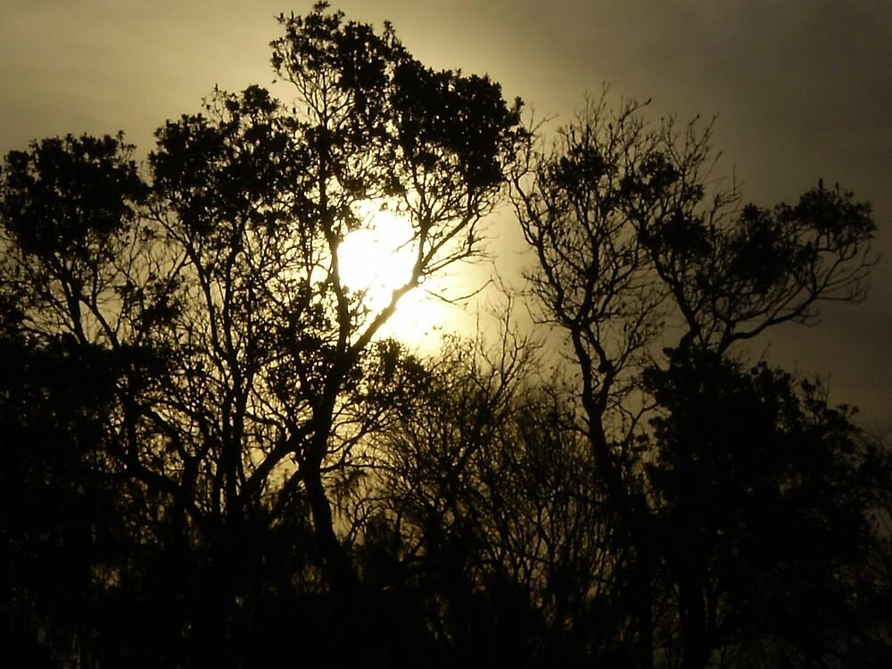 The Gnarled Sunlight by GypsyJive