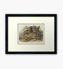 John James Audubon - Felis Onca, Linn. The Jaguar. Female (1846) Framed Print
