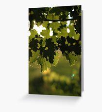 Vineyard wanderings Greeting Card