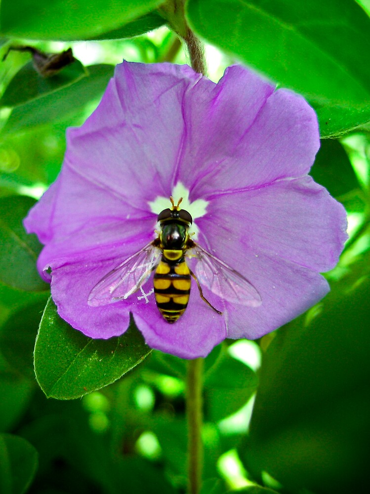 Bee and flower by Michelle Williams