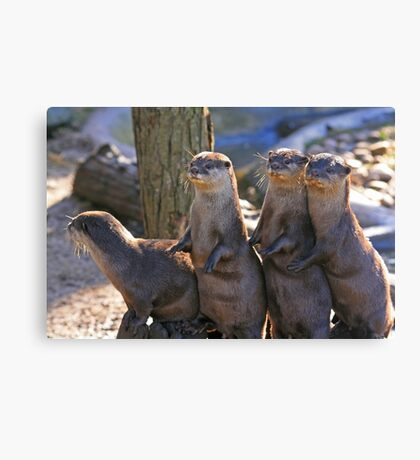 A Bevy of Otters Canvas Print