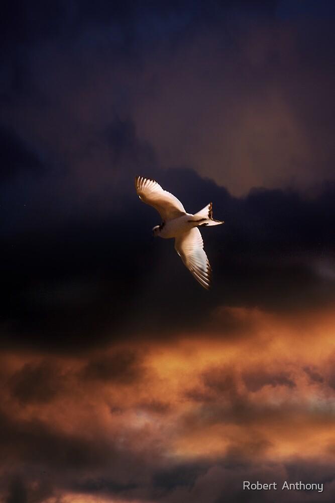 Seabird by Robert  Anthony