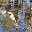 How to Tire out a Bouncy Labrador   (See 'Artist Notes' for more images) by Meg Hart